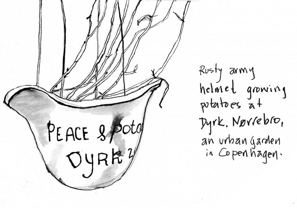 Dryk Nørrebro potato plant