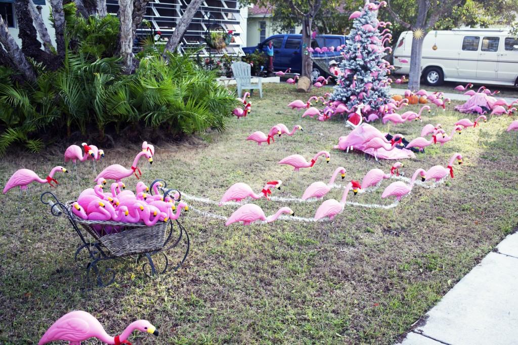 front yard display flamingo